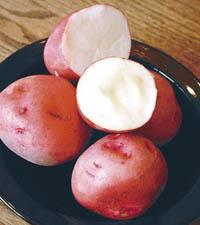 KartoffelRaja